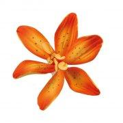 1 Giglio arancione (4,8 cm) - Non commestibile